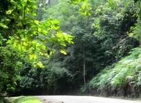 Road through the jungle