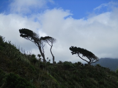 Shaped by the prevailing wind