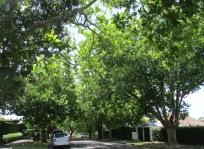 Leafy suburb