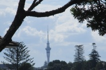 Glimpses of the Sky Tower