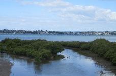 The Tamaki estuary