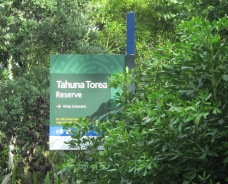 The reserve across the road from our Auckland bolt-hole