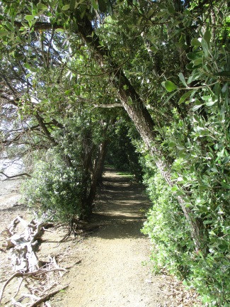 auckland-walk-014