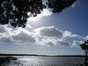 Auckland walk 026