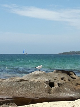 cronulla-beach