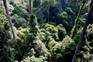 Rain forest from canopy walk